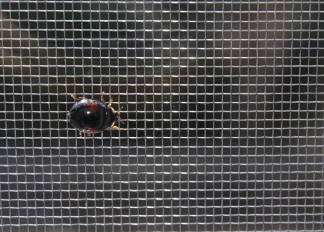 トイレや寝室の窓、網戸にしても虫が入ってくる!対策は?