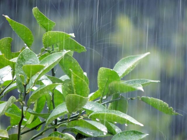 梅雨の時期こそ、必需品!おすすめ布団乾燥機ランキング!