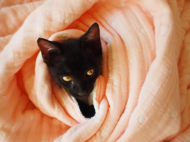 うちのアイドル!愛猫のために写真映えする毛布やベッドを!