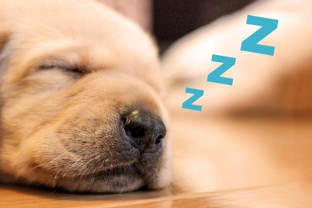 睡眠中によだれを垂らしてしまう!その原因と防止法とは?