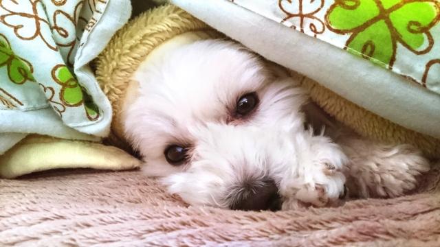 保温性が高い寝具6選!冬に最適な人気の寝具を紹介