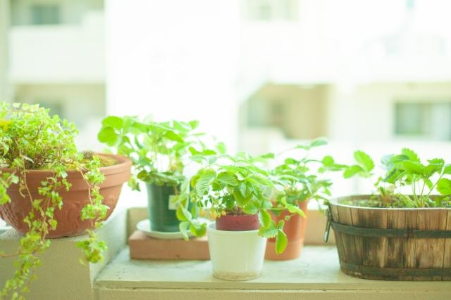 インテリアには観葉植物!初心者が育てやすい種類を紹介