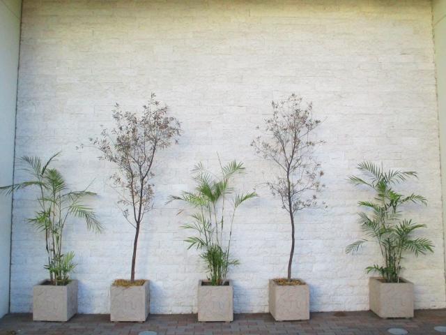 モルタルで鉢植えを作ろう!その作り方や育てやすい植物は?