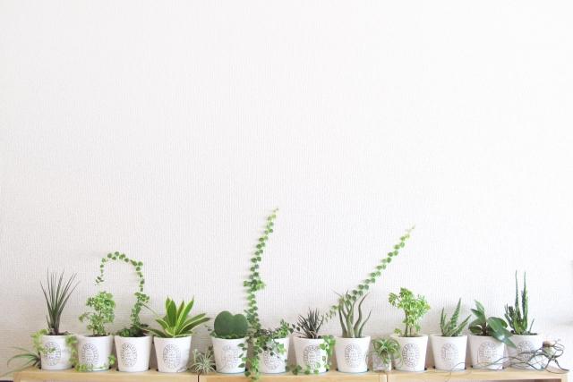 インテリアにグリーンをプラス!光触媒の観葉植物がおすすめ