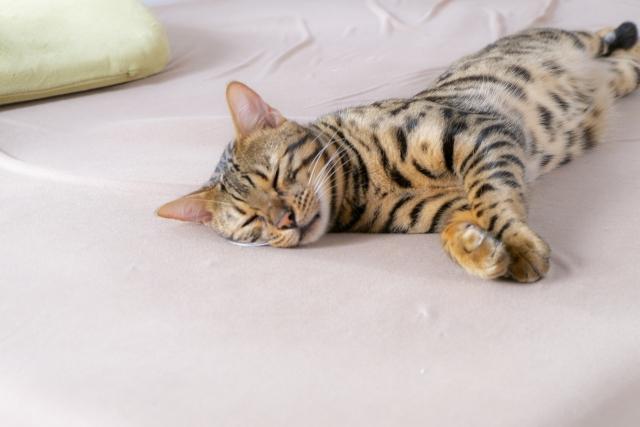 ペットのベッドは手作りできる?作り方と注意点をご紹介!